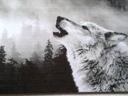black and white wolf pics