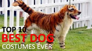 top halloween costumes 2017 10 best dog costumes and creative halloween ideas youtube