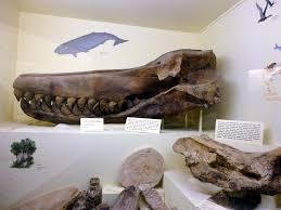 the coastal paleontologist atlantic edition february 2012