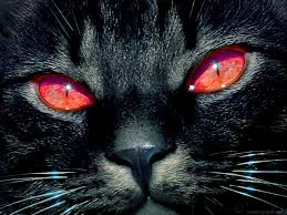 red eye black cat scary halloween hd wallpaper desktop scary