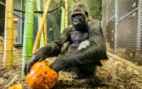 halloween spirit bronx zoo tampa s lowry park zoo s halloween