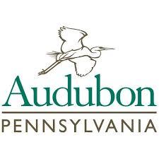 Audubon Backyard Bird Count by Bird Watching 101 For The Great Backyard Bird Count Copy