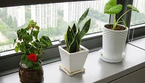 Classy Cubicle Decorating Ideas How To Decorate Your Office Cubicle To Stand Out In The Crowd
