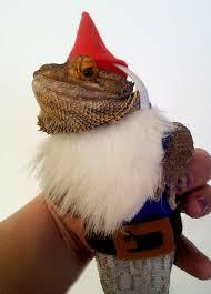Bearded Dragon Halloween Costume Bearded Dragon Costume Garden Gnome Getstuft Etsy