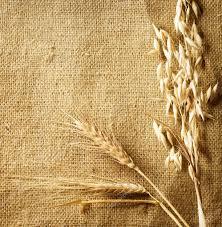 wheat ears on burlap background country style with copy space