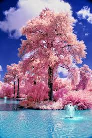 173 best trees beautiful trees images on trees