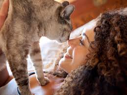 how to beat cat allergies health