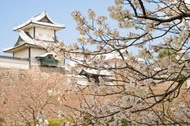 cherry blossom tree facts japan s cherry blossom 15 facts about sakura insider journeys