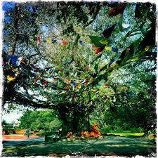 bodhi tree living on my own terms random inspirations from