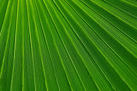 Free Green by Free Stock Photo Of Green Lines Macro