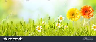 colorful fresh panoramic spring banner orange stock photo