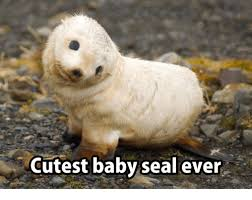 Baby Seal Meme - cutest baby seal ever meme on me me