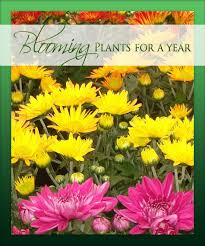 blooming plants blooming plants for a year choose from 3 6 or 12 months