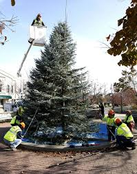 naperville christmas tree tall green and 17