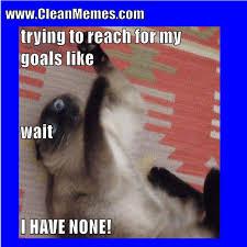 Clean Memes - image result for cat memes clean cat memes pinterest cat memes