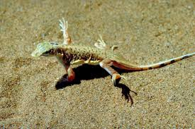 the habitat of lizards is nothing like you u0027d expect find how it is