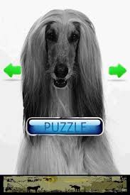 afghan hound top speed dog puzzle afghan hound android apps on google play