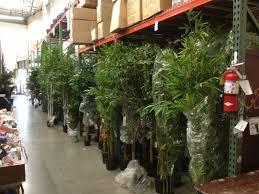 silk trees in the san diego warehouse 2013 shinoda design center