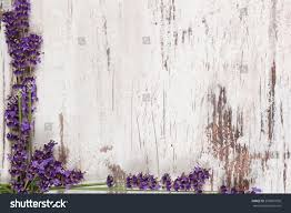 lavender background lavender on white wooden stock photo 299067050