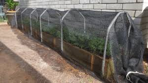 Plants That Do Not Need Much Sunlight by Shade Cloth Protecting Your Plants From Extreme Summer Heat Youtube
