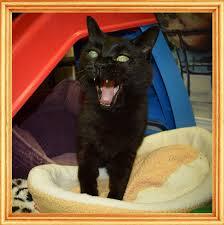 blind cat rescue and sanctuary
