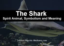 the shark spirit a complete guide to meaning and symbolism