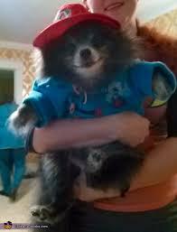 paddington clothes paddington dog costume