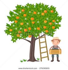 vector illustration boy picking oranges stock vector 279290855