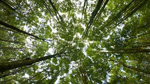 tree tops from below steadicam rotating stock