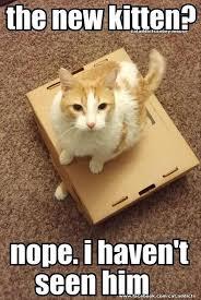 Funny Kitten Memes - funny kitten memes 1