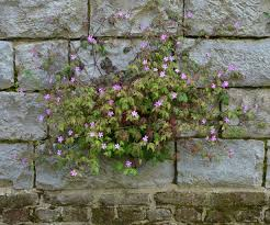 flower gardening 101 native gardening 101 turn your yard into a haven for wildlife