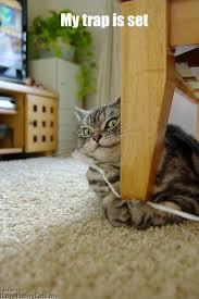 Cat Trap Meme - trap cat meme by sambabayans memedroid