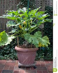 Vegetable Garden In Pots by Garden Design Garden Design With How To Landscape Our Garden Gate