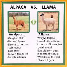 Alpaca Meme - alpaca vs llama funny