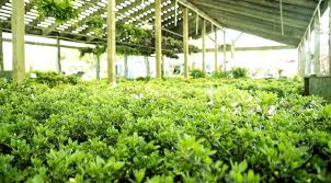 plantopia u2013 wholesale to the public