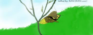swallowtail butterfly coming out of cocoon drawing of swal flickr