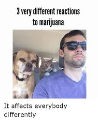 Weed Memes - different reaction to marijuana funny weed memes