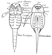 insect internal anatomy image collections learn human anatomy image