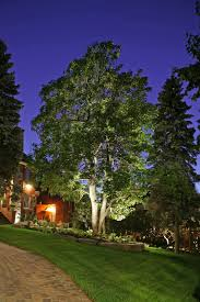 Landscape Lighting Ideas Trees 5 Dramatic Landscape Lighting Ideas For Your Home