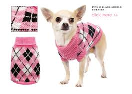 chihuahua sweaters chihuahua s affordable knitted sweaters will keep your