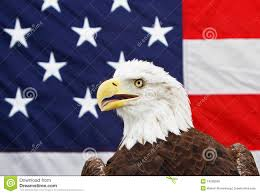 Bald Eagle And American Flag American Flag Bald Eagle Stock Images 390 Photos