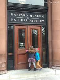 harvard museum of natural history u2014 follow our lead