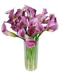 Purple Lillies Purple Lilies Flowers Lilies Flowers