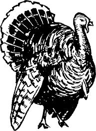 clipart turkey