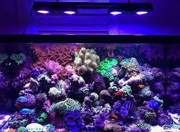 Floating Aquascape Reef2reef Saltwater And Reef Aquarium Forum - 447 best aquarium saltwater images on pinterest reef aquarium