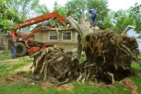 file fema 44294 damaged tree removal in oklahoma jpg