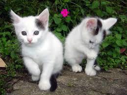 gatos cats gatos pinterest gatos cat and animal