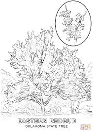 oklahoma state tree coloring page free printable coloring pages
