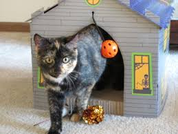Cardboard Cat Scratcher House The Cat In The Haunted House Lady With Books