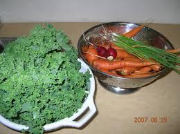 native alaskan plants eat localaska resources learn about alaska foods eat localaska
